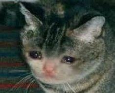 breeds: information, characteristics and behavior [:en]Cutest Cat Ever![:] - cute cats[:en]Cutest Cat Ever! Sad Cat Meme, Cute Cat Memes, Memes Funny Faces, Cute Cats, Funny Cats, Funny Animals, Cute Animals, Cutest Cats Ever, Cat Crying