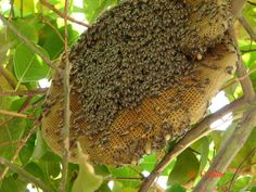 http://aetherforce.com/wp-content/uploads/2015/03/hive-15-11-bigger-but-less-bees.jpg