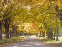 Country Road 1 Royalty Free Images, Country Roads, Autumn, Stock Photos, Painting, Art, Art Background, Fall, Copyright Free Images