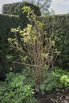 7 DIY plant supports your roses, climbers and vegetables need this summer