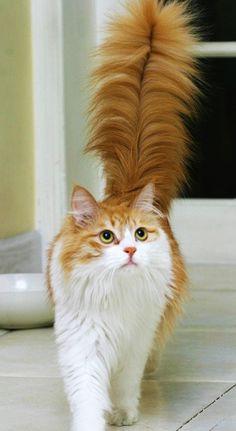 Kedinizi günde iki kez fırçalayarak üzerindeki ölü tüyleri toplayabilir ve onun daha sağlıklı bir cilde sahip olmasını sağlayabilirsiniz.