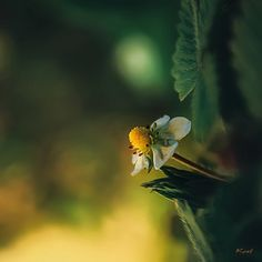 Le soleil dans un baiser... by Ikonokl4st on DeviantArt