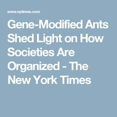 Gene-Modified Ants Shed Light on How Societies Are Organized - The New York Times