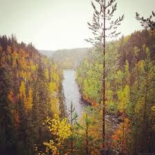 Image result for oulanka national park finland Finland, Countries, National Parks, Autumn, Places, Painting, Image, Art, Art Background