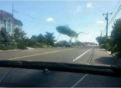 Tried to take a Photo of a Grasshopper on my windshield but its looks like its Giant and Destroying the town http://ift.tt/2kd2qh2