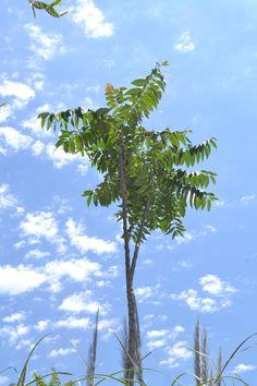 Árbol Cielo Nubes Reserva Ecológica Costanera