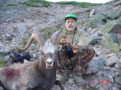 Okhotsk snow sheep (a report on the hunt in August 2009) | Sergey Outfitter
