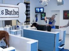 Dog grooming salon interior design google zoeken veterinary business matters self serve dog wash reaches robbinsdale youtube solutioingenieria Images
