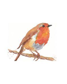 English Robin.
