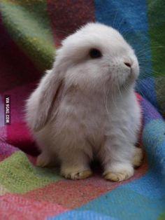 White Bunny Pal