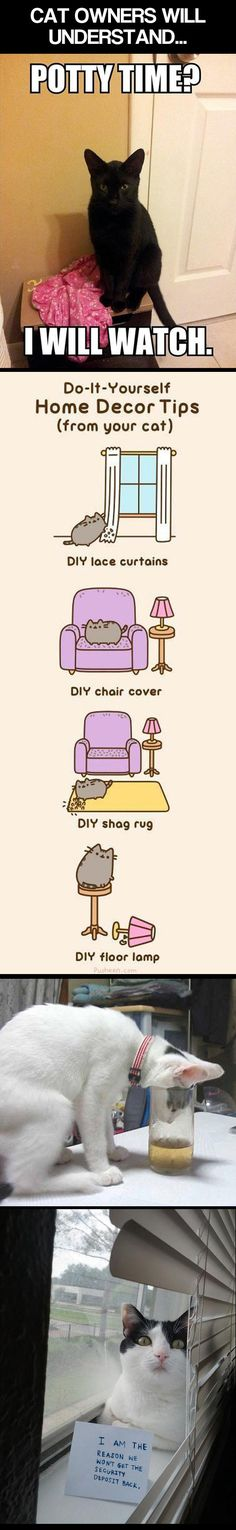 funny-cat-owners-understand
