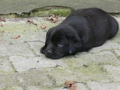 Troy vijf weken oud