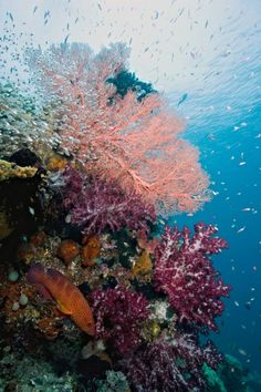 Rainbow Reef - Raja Ampat, Indonesia