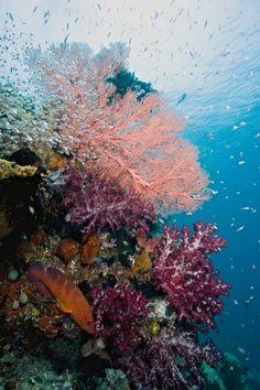 Rainbow Reef - Raja Ampat, Indonesia