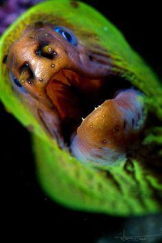 Moray EEL by nicolas.terry