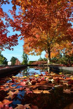 This beautiful garden in Oregon is a serene hidden gem.
