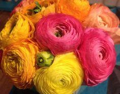 Ranunculus, lækre store ranunkler fra Holland.  Et mix af flotte farver, det bliver man da glad i låget af!