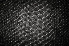 Crocodile black skin texture Royalty Free Stock Image