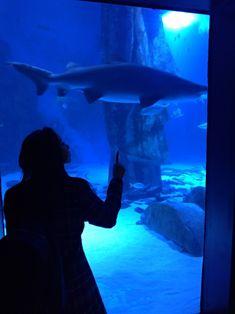 Whale, Animals, Travel, Whales, Animales, Animaux, Animal, Animais