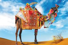 Camel in desert Poster Camel fair festival in India, Rajasthan, Pushkar Poster Adventure travel landscape background Poster Poster. Flower Beard, Camelo, Festival Image, Festivals Around The World, Landscape Background, Travel Drawing, Udaipur, Jaisalmer, Jodhpur