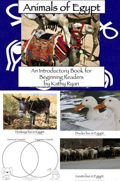 Bring Egypt to even beginning readers with this simple, picture based informational text mini-book. This book is set up like a beginning reader, with repetitive text and picture clues. There are 10 pages of pictures and text all featuring a different animal that lives in Egypt.     Also included are thinking questions and a Venn Diagram so students can compare animals that live in America to animals that live in Egypt.
