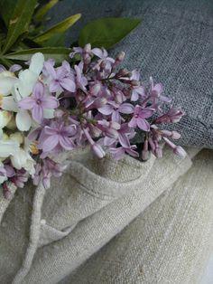 lilacs & texture