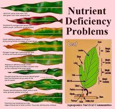 nutrient+deficiency+problems+in+plants.jpg 719×684 pixels