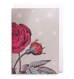 FRENCH ROSE Taking inspiration from 18th-century nature drawings and prints, these elegant floral card designs are feminine and timeless