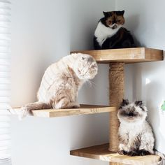 Pretty Kitty, Pretty Cats, Beautiful Cats, Cat Traps, Bottlenose Dolphin, Persian Cats, Cat Photography, Adorable Animals, You Nailed It
