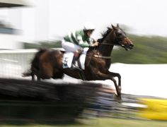 Photo Gallery: 45th running of the High Hope Steeplechase at the Kentucky Horse Park