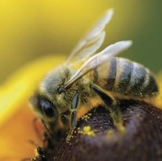 A Point of View: On #bees and beings