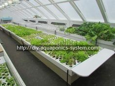 indoor hydroponic systems - how to make a fish tank garden.raft aquaponics 1407542590 #hydroponicgardenhowto