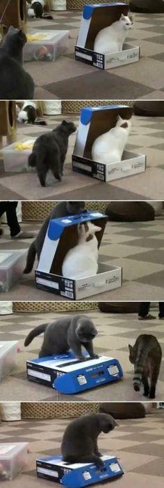 Cats are jerks…#funny #lol #lolzonline