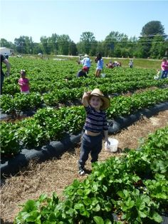 Where in Atlanta and surrounding counties in Georgia to find pick your own farms and orchards for fruit, vegetables, pumpkins and canning & freezing instructions!