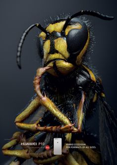 Learn about Huawei: Wasp Fly Dragonfly http://ift.tt/2rg6bTl on www.Service.fit - Specialised Service Consultants.