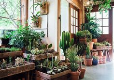 Succulents and cacti in the shop