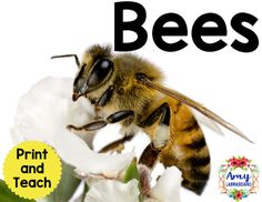 Bees Reading Passage - Reading passages included.  Everything you need to print and teach.
