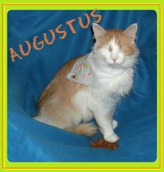 Augustus found his forever home 9/15/12! Congratulations Augustus :)