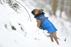 ♡ GENKI BULLDOG - Hundeblog ♡: Noch mehr Schnee