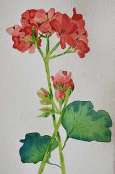 Art, Fine Art-Watercolor Painting of Red Geranium