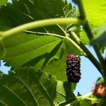 Grow Your Own Berries With Less Work -Posted April 25, 2014