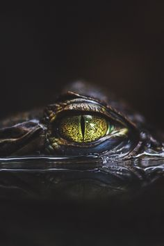 "itstheluxurylife: "" Hypnotic // Source "" Crocodile Eyes, Crocodile Tattoo, Reptile Eye, Caiman, Reptiles And Amphibians, Nature Animals, Animals And Pets, Cute Animals, Wildlife Photography"