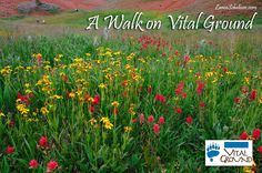 A walk on Vital Ground.
