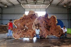 Giant burled wood slab. Can you imagine this as part of a floor? Wow!