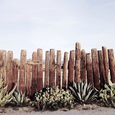 cacti and succulents against a rustic wooden fence