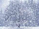SnowDays!