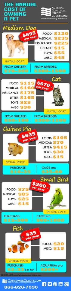 Cost of owning a pet can be surprising. Check your budget before promising anyone a new puppy!
