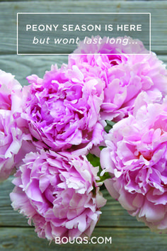Its your favorite time of the year? Us too. Check out the Peonies at the Bouqs Company. Free Shipping always!