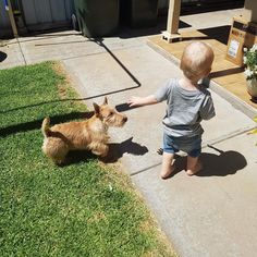 "291 Likes, 3 Comments - Carinya Scottish Terriers (@carinyascotties) on Instagram: ""Rosie adores her cousin Bryce and loves her trips to South Australia.  ‍♂️= @x_nikki_x…"""