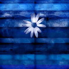 White Daisy On Blue Abstract Art by Ann Powell